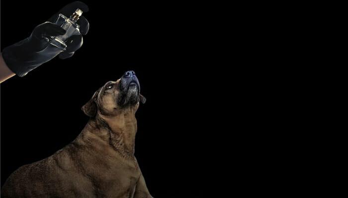 What Are Dog Deterrent Sprays