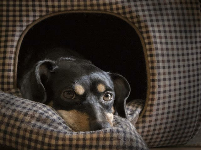 Using Heating Mats And Pads How To Heat A Dog House?