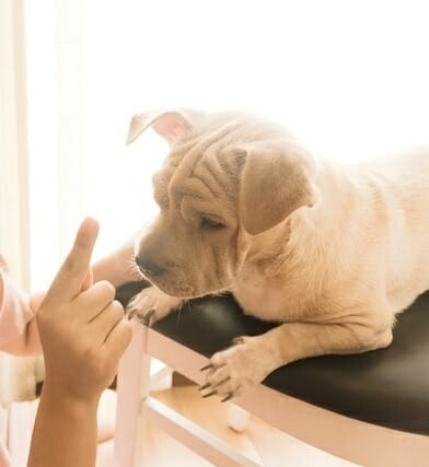 Why Do Dogs Poop In The House?