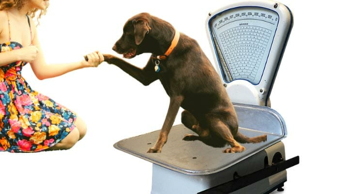 How To Calculate Your Dog's Ideal Weight