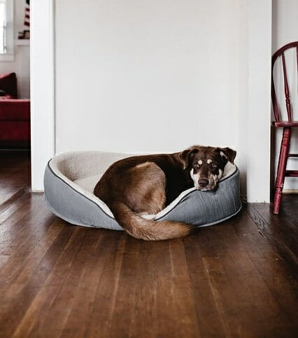 How To Keep Dogs From Pooping In The House?