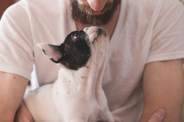 What Smells Are Calming To Dogs?