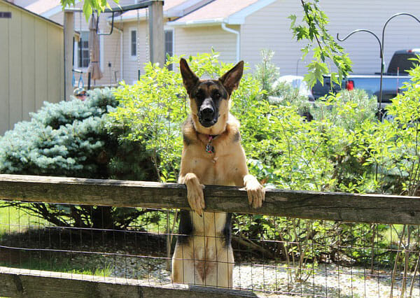 Ways To Keep Dogs From Digging Under The Fence