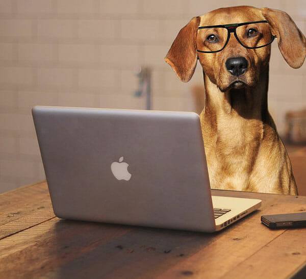 What Is Spirit Dog Training? SpiritDog Academy