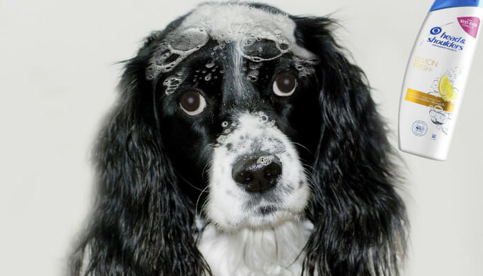 Can You Use Head & Shoulders On Dogs?