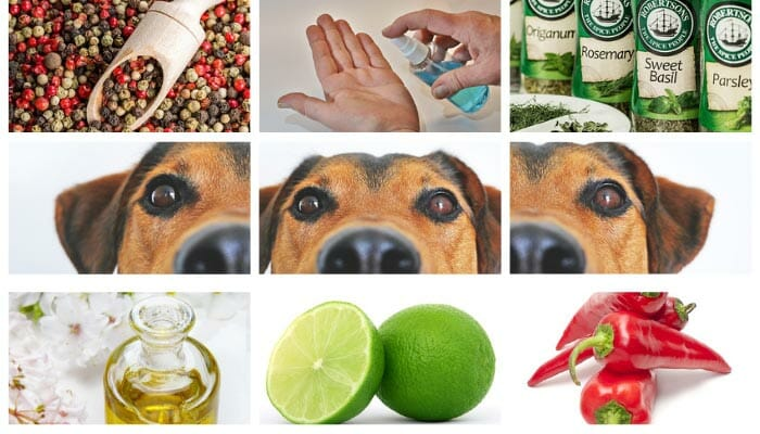 10 Smells Dogs Hate