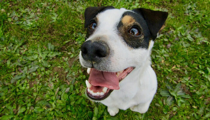 Why Are My Dog's Teeth Chattering?