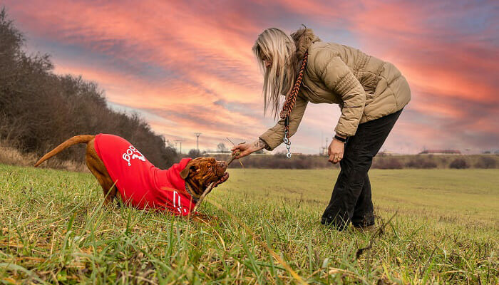 How To Become The Top Dog With SpiritDog Training