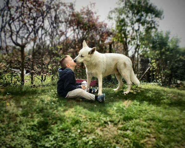 Is It Safe To Kiss Your Dog?