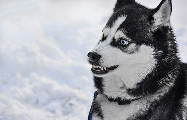 Why Do Dogs Chatter Their Teeth? Stress Or Anxiety