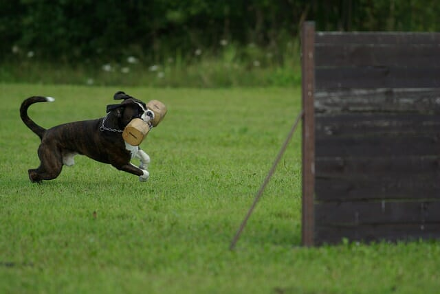 What Is Spirit Dog Training? Individual Courses