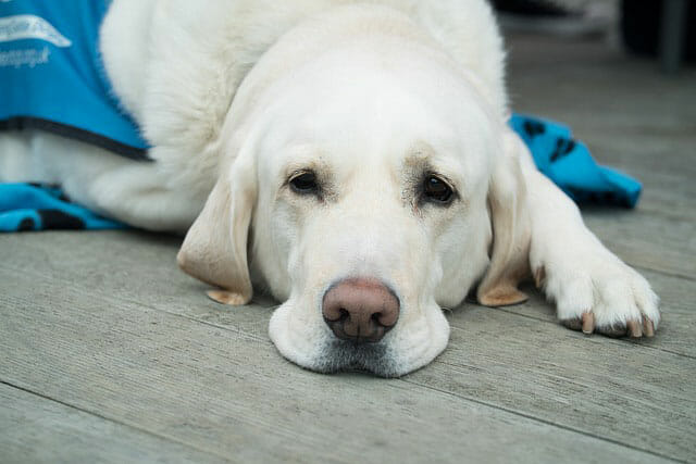 Why Does A Dog's Nose Change Color?