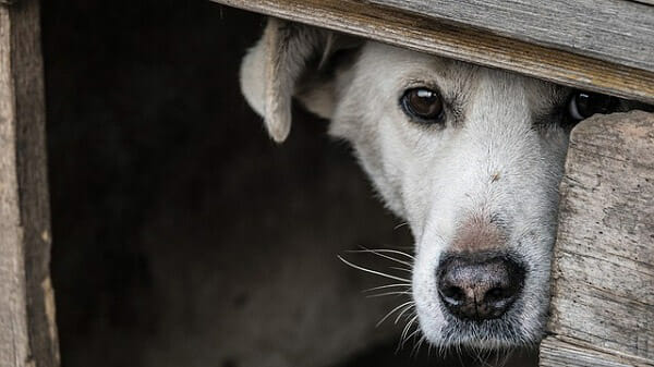 What Causes Fear In Dogs?