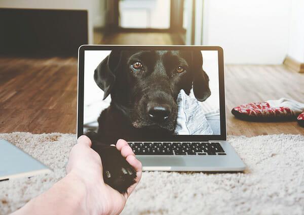 What Are The Benefits of SpiritDog Training?