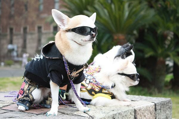 What Your Pet Will Need To Get Your Dog Into Modeling