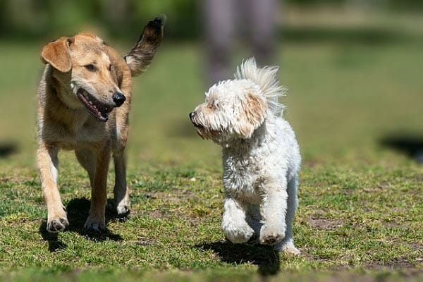 Steps To Follow When Your Pet Is Afraid Of You Help Your Pet Socialize
