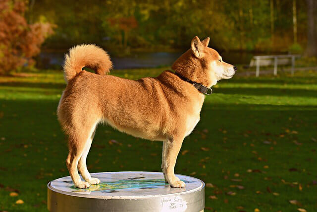 Common Dog Tail Positions And Their Meanings