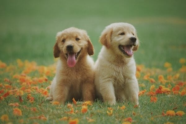 10 Best Places To Sell Puppies Online