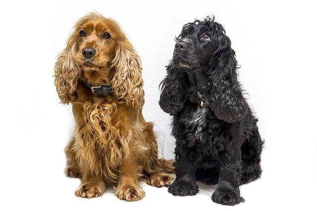 Which Dogs Are Prone To This Problem?