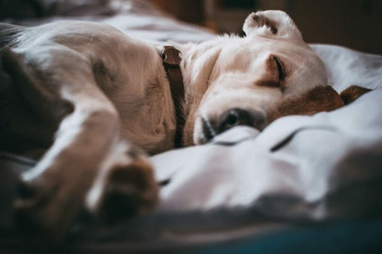 How Long Do Puppies Sleep?