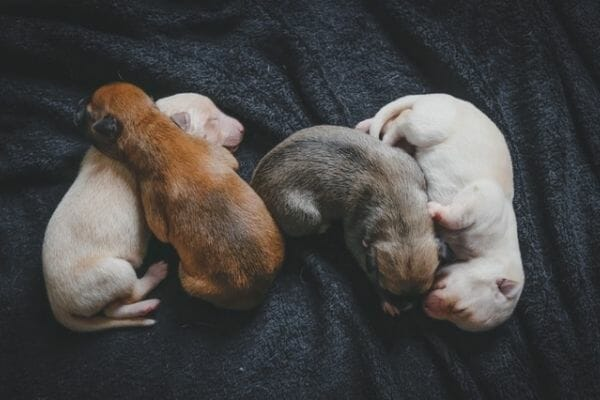 group of cute puppies sleeping together